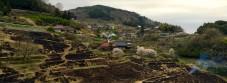 野焼き後の棚田