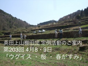 第203回 英田上山棚田団 定例活動 「うぐいす・桜・春がすみ」